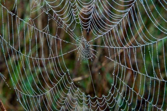 Dew Covered Spiderweb - Cades Cove Great Smoky Mountains
