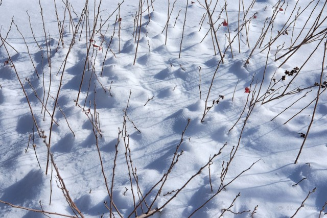 Patterns of Snow and Plants
