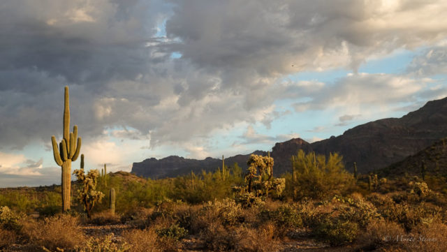 Saguaro and Superstition Mountains