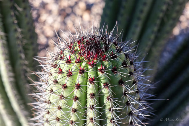 Needles on Cactus