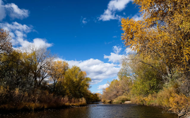 Poudre River at North Shields Ponds trail.