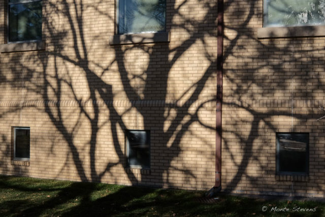 Shadows on Campus