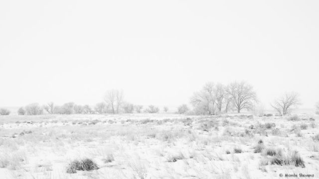 Snowfall at the Arapahoe Bend Nature Area